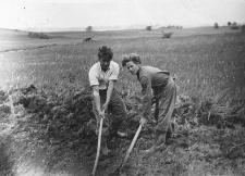 Prace melioracyjne na łąkach